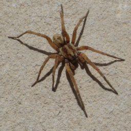 Уничтожение пауков в Ростове-на-Дону